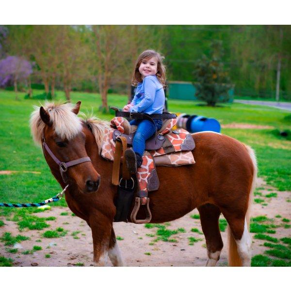 Bigger Zoo To You & 1 Pony